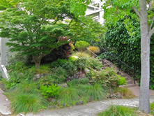 Woodland and Perennial Shrub Garden